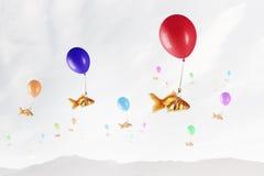 Mouche de poisson rouge sur le ballon Photos libres de droits