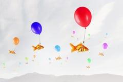 Mouche de poisson rouge sur le ballon Photo stock
