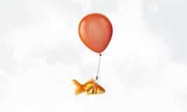 Mouche de poisson rouge sur le ballon Images libres de droits