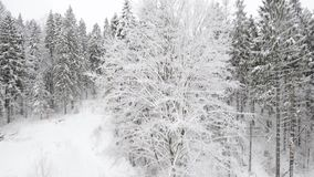 Mouche en bois d'hiver clips vidéos