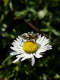 Mouche et fleur Photographie stock