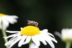Mouche/Fliege Photo libre de droits