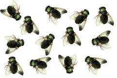 Groupe de mouches de morts d 39 isolement image stock for Attrape mouches maison