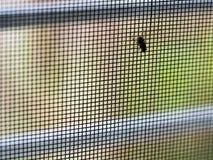 Mouche sur l'écran de fil de moustique Photographie stock