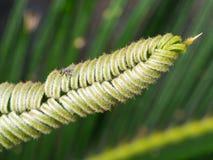 Mouche sur l'agave image stock