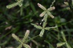 Mouche sur l'herbe images stock