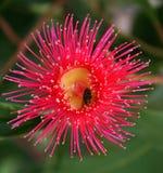 Mouche sur la fleur Photo stock