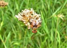 Mouche sur une fleur Photographie stock libre de droits