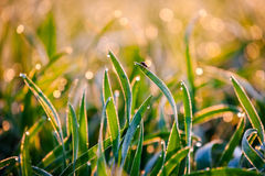 Mouche sur une herbe de rosée de matin Photographie stock libre de droits