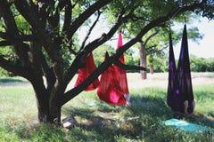 Mouche-yoga de pratique de belle fille à l'arbre Yoga avancé photo libre de droits