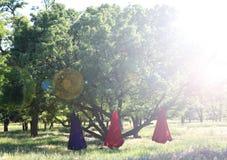 Mouche-yoga de pratique de belle fille à l'arbre Yoga avancé image libre de droits