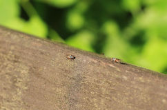 Mouches minuscules Photographie stock