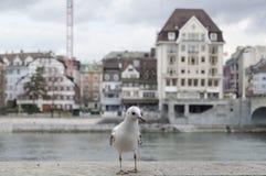 Mouette à Bâle Image stock