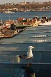Mouette à Istanbul Image libre de droits