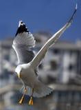Mouette à Istanbul photographie stock libre de droits