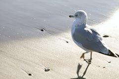Mouette à la plage Photos libres de droits