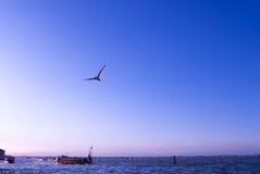 Mouette à Venise photographie stock libre de droits