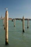 Mouette à Venise Photo stock