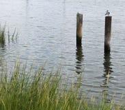 Mouette étée perché sur un pylône Photo libre de droits