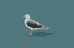 Mouette illustration stock