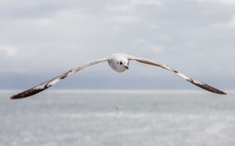 Mouette Photo stock