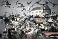 Mouette affamée d'oiseaux Photo stock