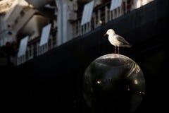 Mouette argentée sur un courrier de lampe Photographie stock libre de droits