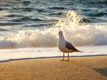 Mouette au lever de soleil Photographie stock libre de droits