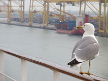 Mouette au port photo libre de droits