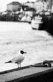 Mouette au port de Trouville images stock