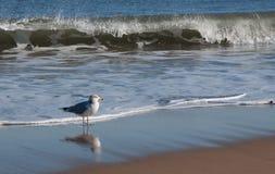 Mouette au rivage avec se briser de vagues Photos stock
