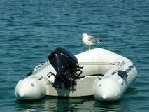 Mouette avec le bateau photo libre de droits