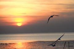 Mouette avec le coucher du soleil à l'arrière-plan Photos libres de droits