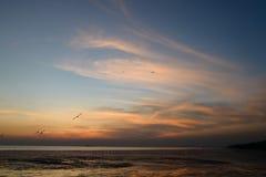 Mouette avec le coucher du soleil à l'arrière-plan Images libres de droits