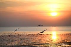 Mouette avec le coucher du soleil à l'arrière-plan Photo libre de droits