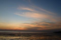 Mouette avec le coucher du soleil à l'arrière-plan Photos stock