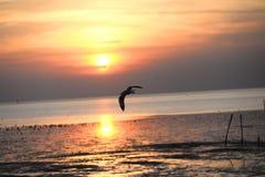 Mouette avec le coucher du soleil à l'arrière-plan Photographie stock libre de droits