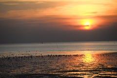 Mouette avec le coucher du soleil à l'arrière-plan Image stock