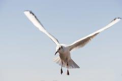 Mouette blanche d'oiseau Photo stock