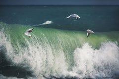 Mouette blanche montant au-dessus de la mer photo stock