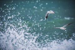 Mouette blanche montant au-dessus de la mer images stock
