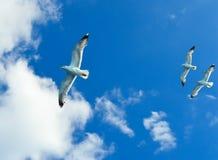 Mouette blanche volant au-dessus du Golfe de Saronic en Grèce Images libres de droits