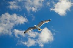 Mouette blanche volant au-dessus du Golfe de Saronic en Grèce Image libre de droits