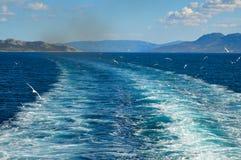 Mouette blanche volant au-dessus du Golfe de Saronic en Grèce Photos libres de droits