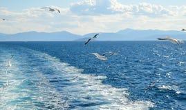 Mouette blanche volant au-dessus du Golfe de Saronic en Grèce Photo stock