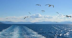 Mouette blanche volant au-dessus du Golfe de Saronic en Grèce Image stock