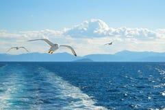 Mouette blanche volant au-dessus du Golfe de Saronic en Grèce Photographie stock libre de droits