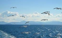Mouette blanche volant au-dessus du Golfe de Saronic en Grèce Photo libre de droits