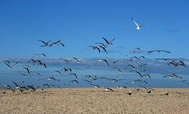 mouette d'oiseaux Photo stock