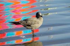 Mouette dans l'eau avec des réflexions colorées Image stock
